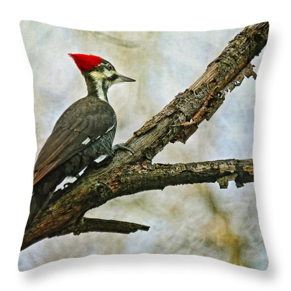 Who's There Throw Pillow by Lois Bryan