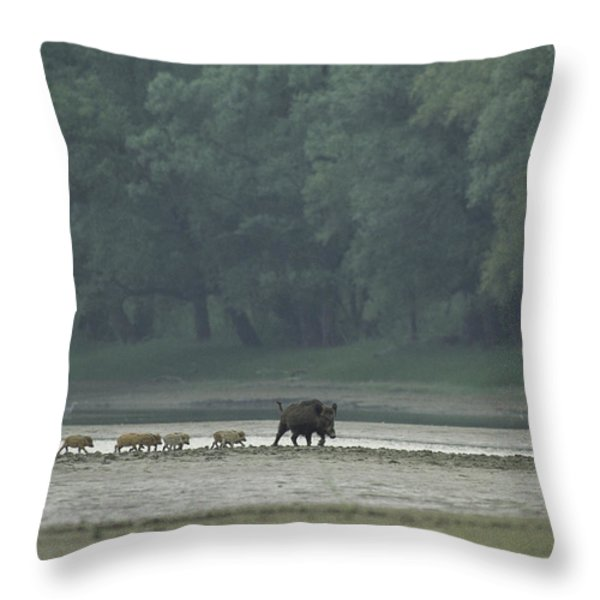 Wild Boar And Her Piglets Running Throw Pillow by Klaus Nigge