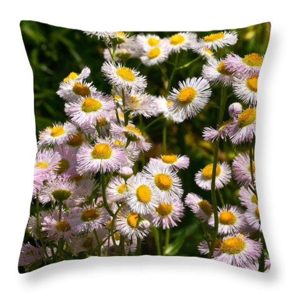Wild Daisies Throw Pillow by Byron Varvarigos