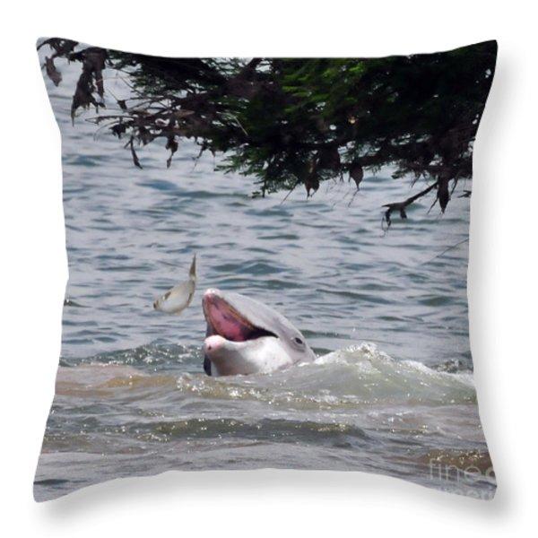 Wild Dolphin Feeding Throw Pillow by Paul Ward