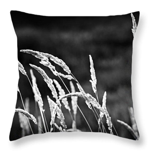 Wild Grass In Black And White Throw Pillow by Elena Elisseeva