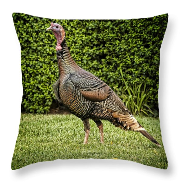 Wild Turkey Throw Pillow by Kelley King
