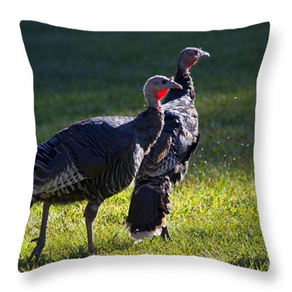 Wild Turkeys Throw Pillow by Mike  Dawson