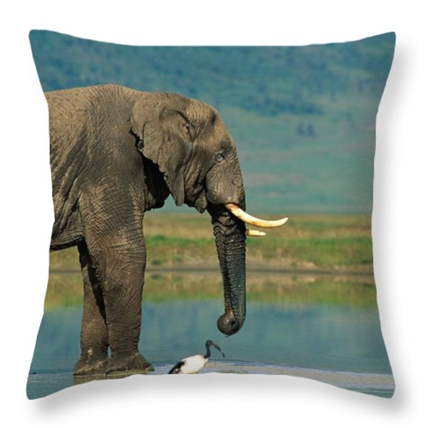With A Sacred Ibis Threskiornis Throw Pillow by Beverly Joubert