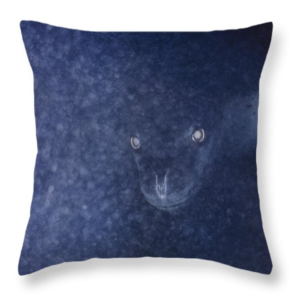 With Glowing Eyes, A Leopard Seal Peers Throw Pillow by Bill Curtsinger