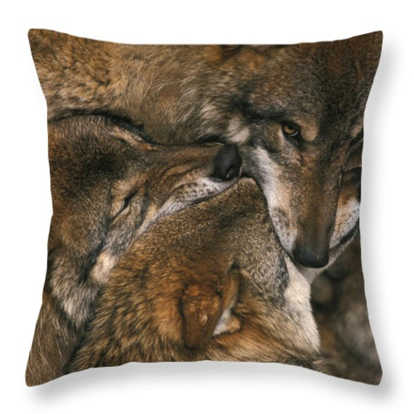 Wolf pack biting each others muzzles Throw Pillow by Intensivelight