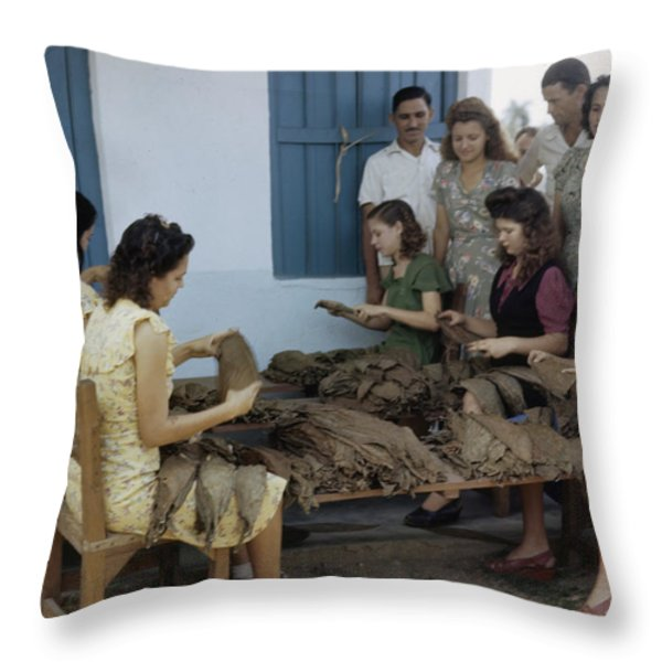 Women Inspect Tobacco Leaves And Select Throw Pillow by Melville B. Grosvenor