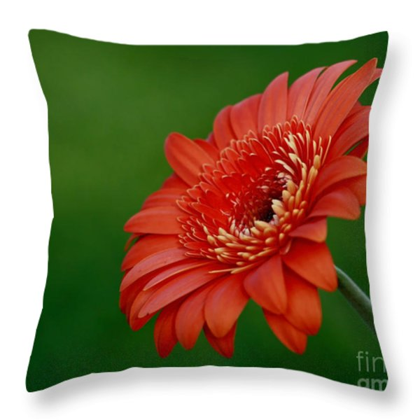 Wonder Of Nature Gerber Daisy Throw Pillow by Inspired Nature Photography Fine Art Photography