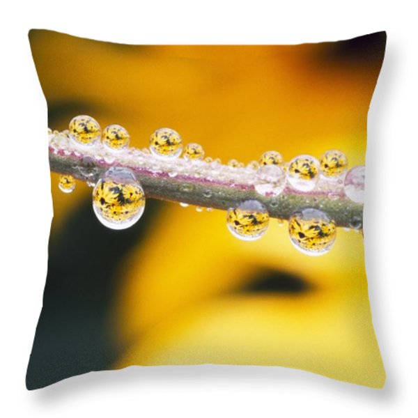 Yellow Flowers Reflected In Dew Drops Throw Pillow by Natural Selection Craig Tuttle