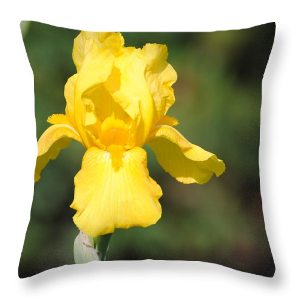 Yellow Iris Throw Pillow by Jai Johnson