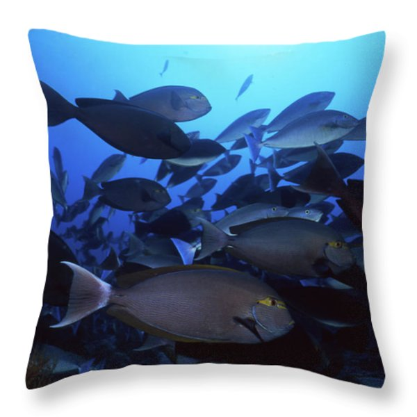 Yellow Mask Surgeonfish, Indonesia Throw Pillow by Beverly Factor