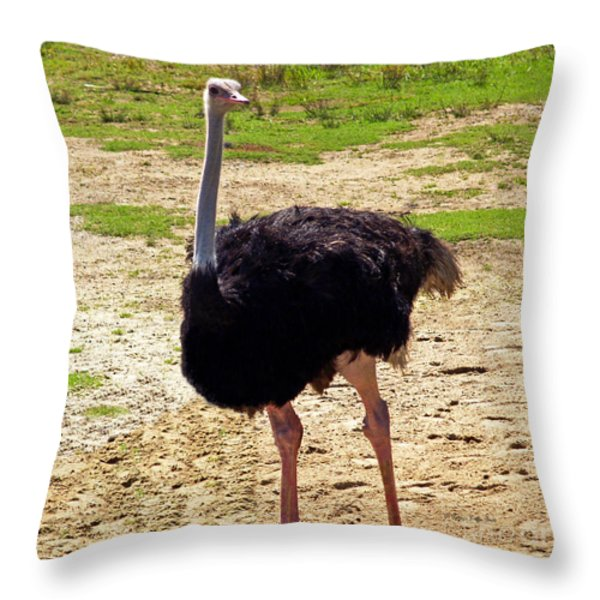 You Look At Me I Look At You Throw Pillow by Patricia Griffin Brett