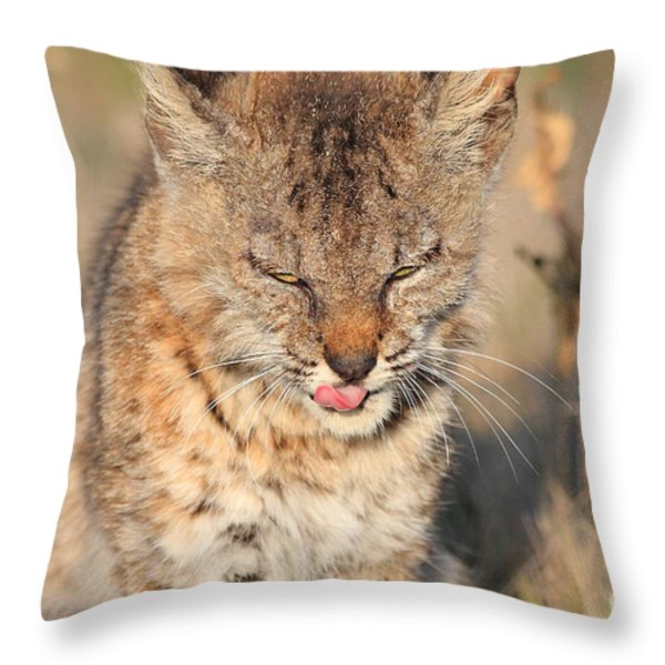 Young Bobcat 02 Throw Pillow by Wingsdomain Art and Photography