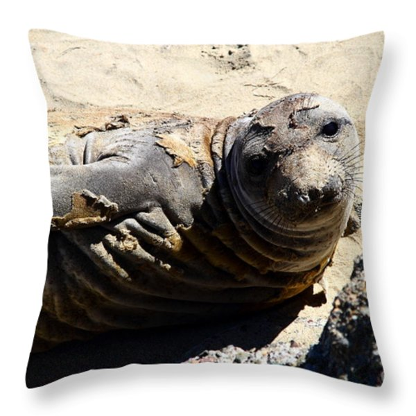 Young Elephant Seal Molting . 7D16091 Throw Pillow by Wingsdomain Art and Photography