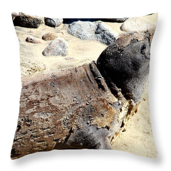 Young Elephant Seal Molting . 7D16118 Throw Pillow by Wingsdomain Art and Photography