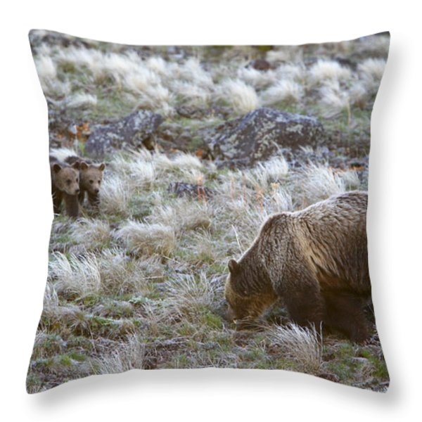 Young Grizzly Cubs Play As Their Mother Throw Pillow by Drew Rush