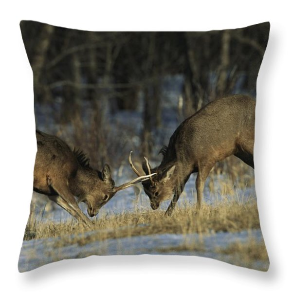 Young Male Sika Deer Practice Sparring Throw Pillow by Tim Laman