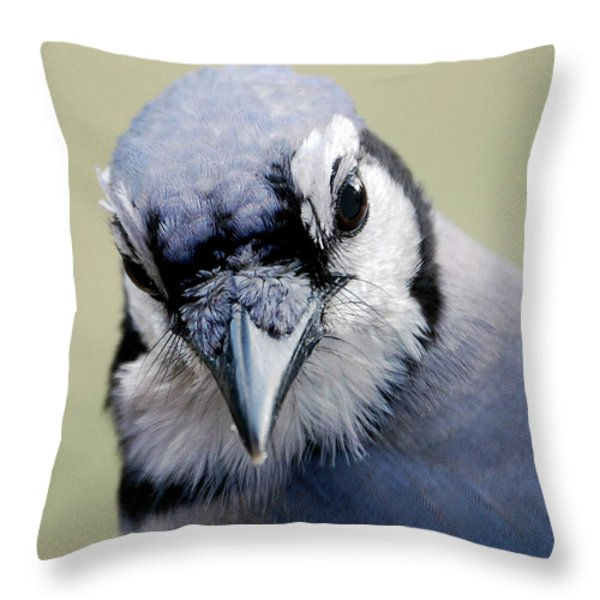 Blue Jay Throw Pillow by Skip Willits