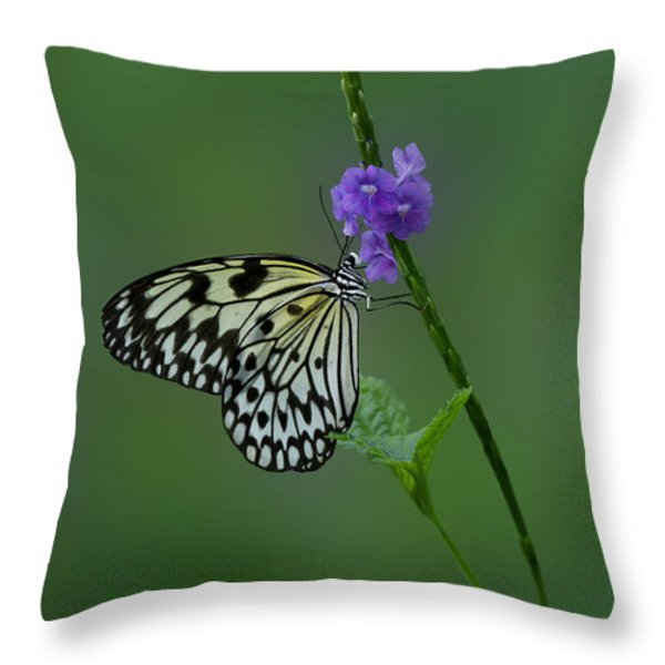 Butterfly on Flower  Throw Pillow by Sandy Keeton