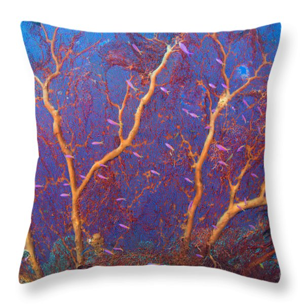 A Red Sea Fan With Purple Anthias Fish Throw Pillow by Steve Jones