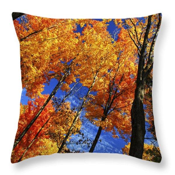 Autumn Forest Throw Pillow by Elena Elisseeva