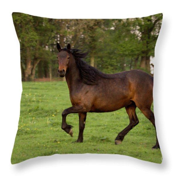 Bay Horse Running Throw Pillow by Angel  Tarantella