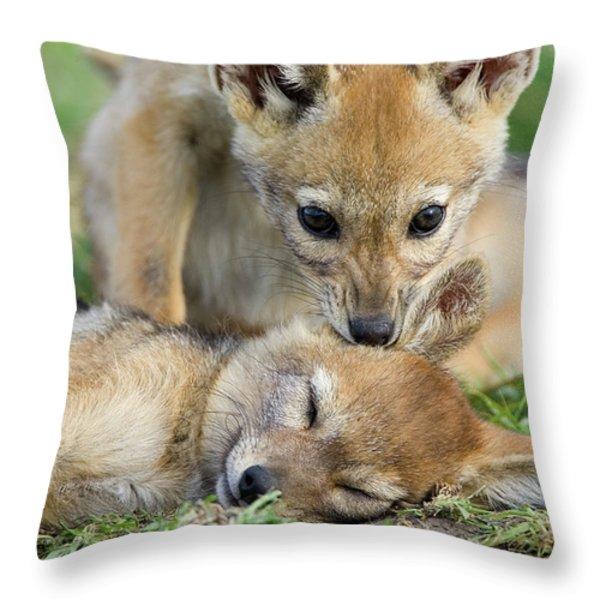 Black-backed Jackal Canis Mesomelas Throw Pillow by Suzi Eszterhas
