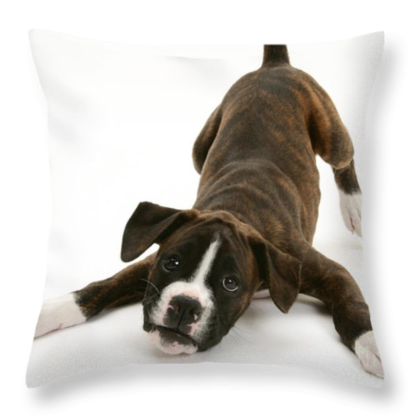 Brindle Boxer Pup Throw Pillow by Jane Burton