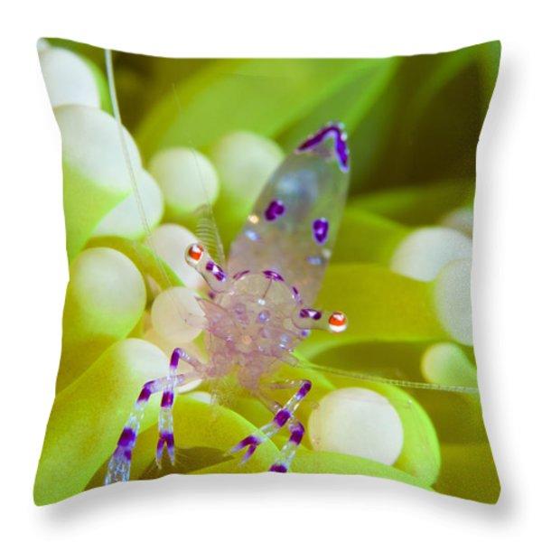 Commensal Shrimp On Green Anemone Throw Pillow by Steve Jones