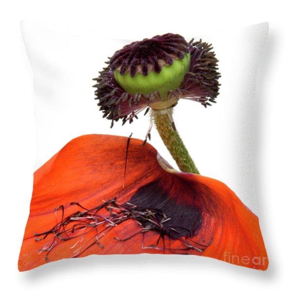 Flower poppy in studio Throw Pillow by BERNARD JAUBERT
