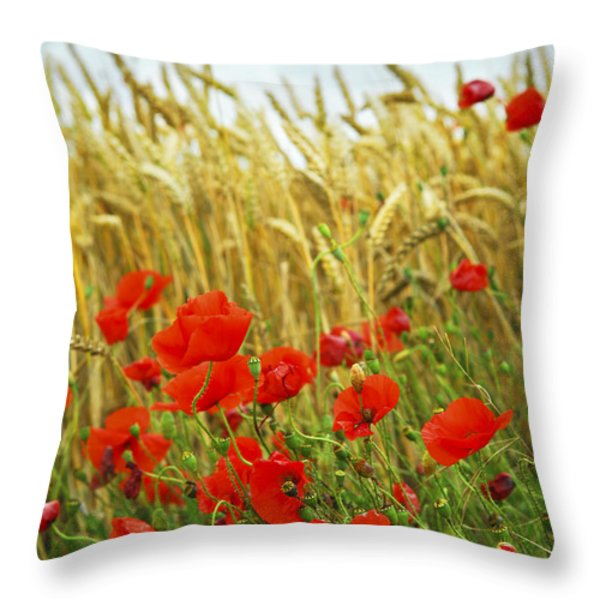 Grain and poppy field Throw Pillow by Elena Elisseeva