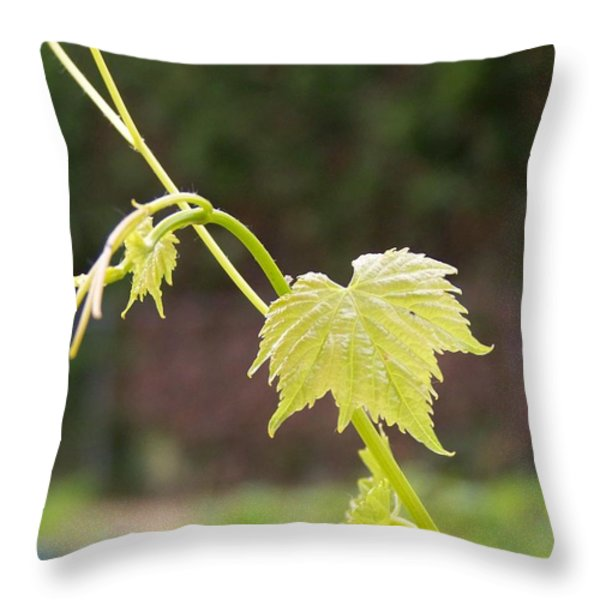 Grapevine Throw Pillow by Heather L Giltner