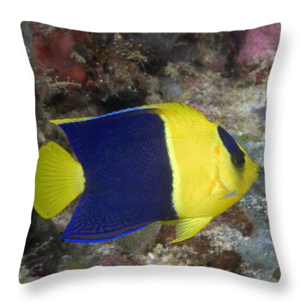 Malaysia Marine Life Throw Pillow by Dave Fleetham - Printscapes