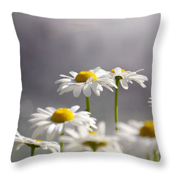 White Daisies Throw Pillow by Carlos Caetano