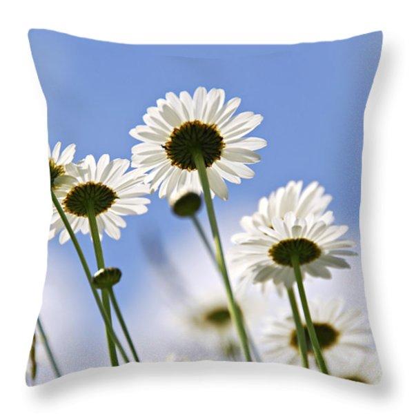 White Daisies Throw Pillow by Elena Elisseeva