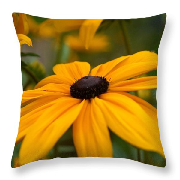 Goldilocks Gloriosa Daisy 2 Throw Pillow by Jouko Lehto