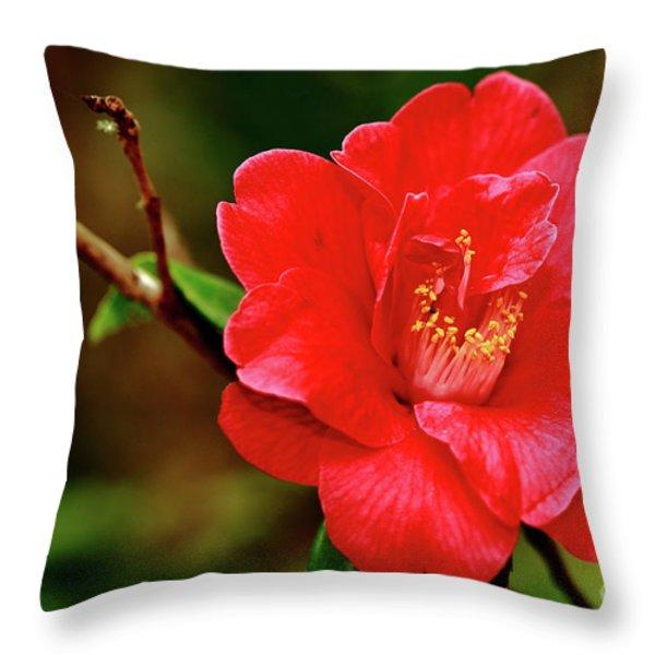 Camellia Japonica Throw Pillow by Gaspar Avila