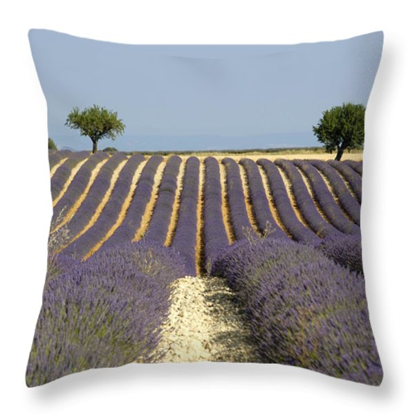 Field of lavender. Provence Throw Pillow by BERNARD JAUBERT