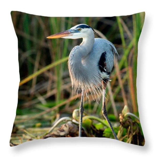 Great Blue Heron Throw Pillow by Matt Suess