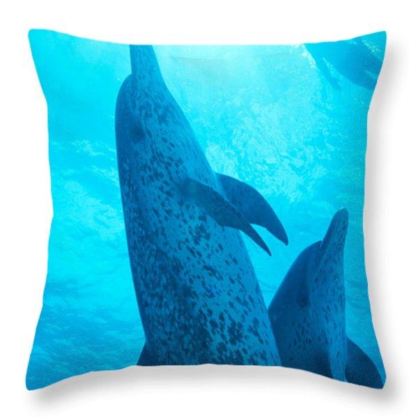 Pair Of Spotted Dolphins Throw Pillow by Ed Robinson - Printscapes