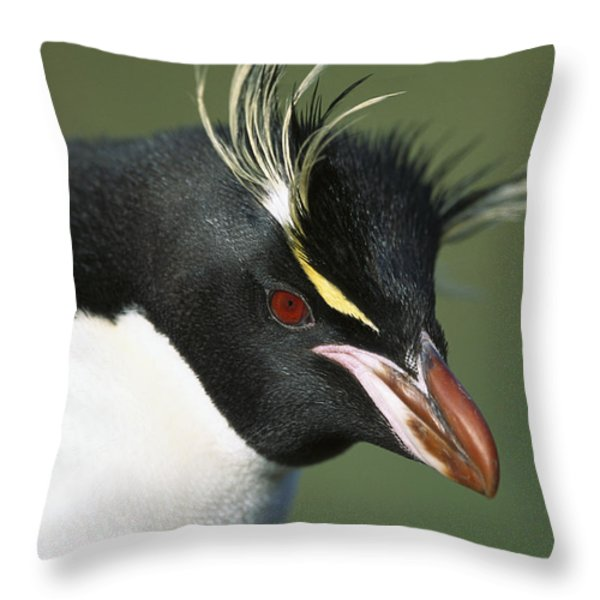 Rockhopper Penguin Eudyptes Chrysocome Throw Pillow by Tui De Roy