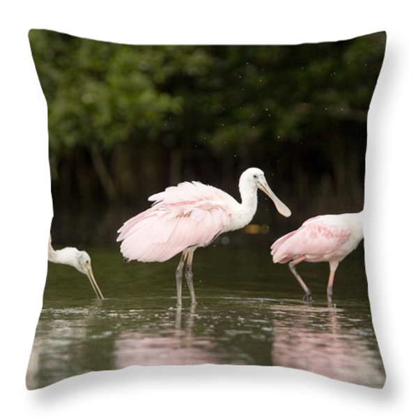 Roseate Spoonbills Ajaia Ajaja Feed Throw Pillow by Tim Laman