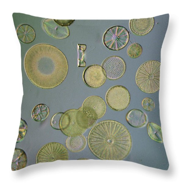 Close View Of Diatoms Throw Pillow by Darlyne A. Murawski