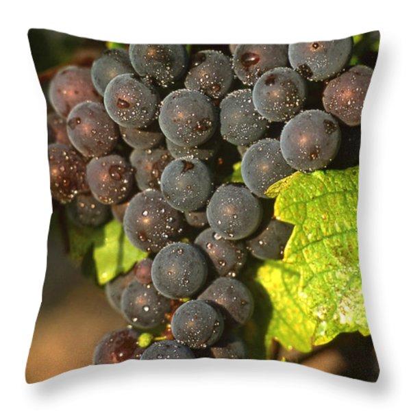 Grapes growing on vine Throw Pillow by BERNARD JAUBERT