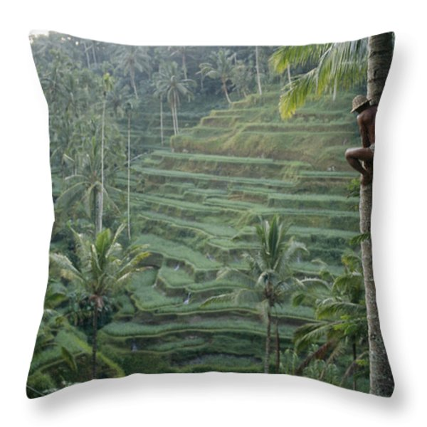 A Bahasa, Or Coconut Tree Climber Throw Pillow by Justin Guariglia