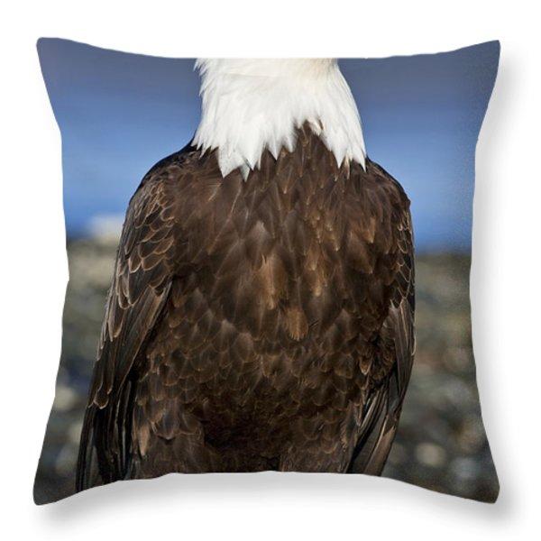 A Bald Eagle Throw Pillow by John Hyde - Printscapes