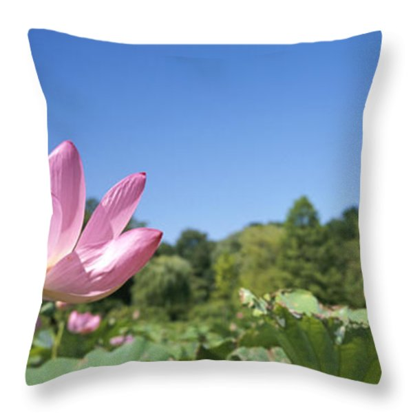 A Beautiful Emperor Lotus Blooms Throw Pillow by Richard Nowitz