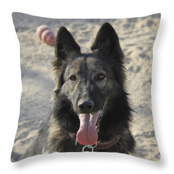 A Belgian Tervuren Military Working Dog Throw Pillow by Stocktrek Images