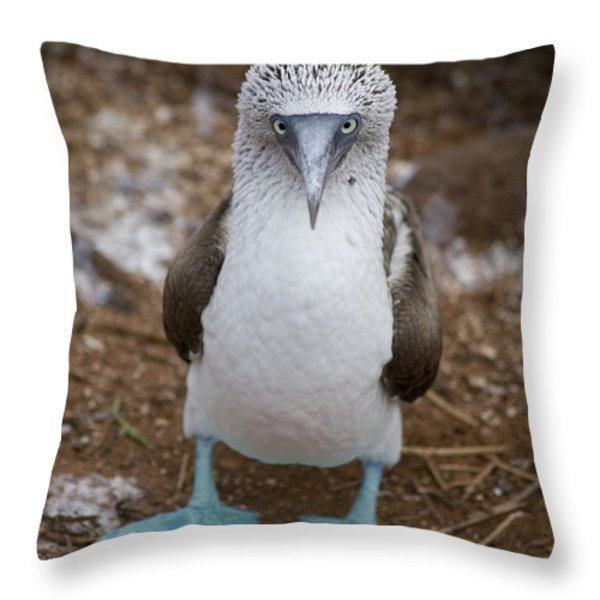 A Blue Footed Booby Looks At The Camera Throw Pillow by Stephen St. John