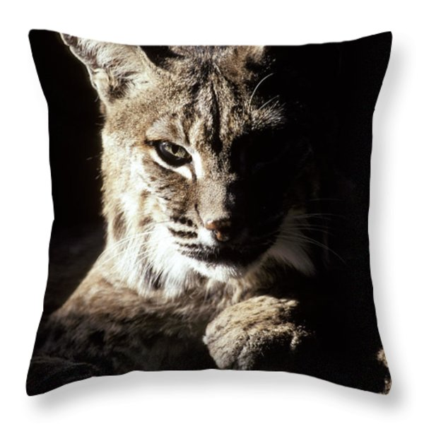 A Bobcat Sitting In A Ray Of Sun Throw Pillow by Jason Edwards